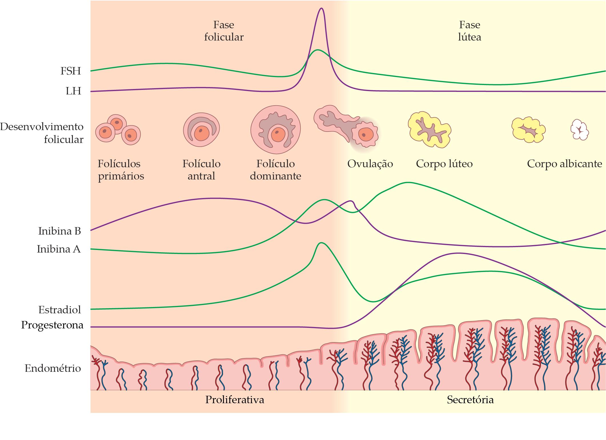 ciclo correto de stanozolol comprimido
