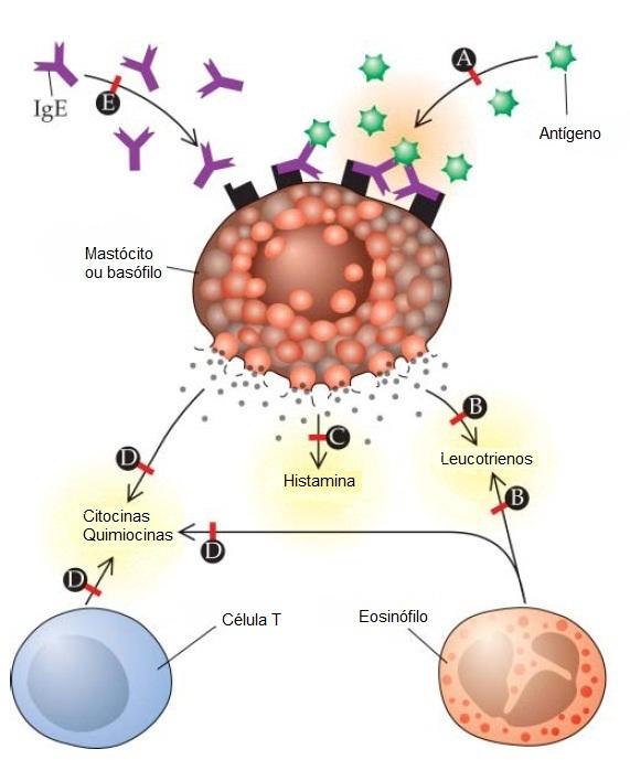 corticosteroides inhalados nombres comerciales