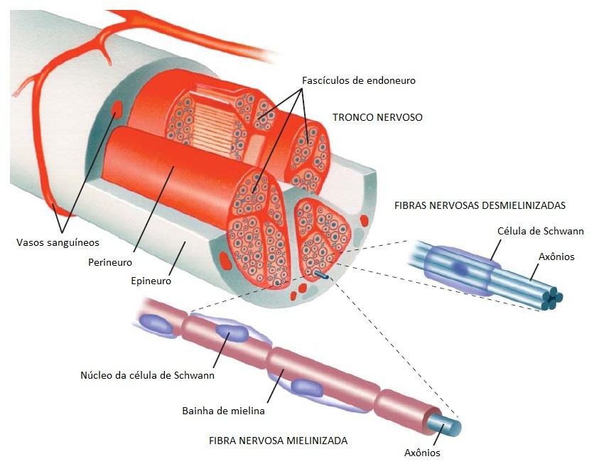 Doenças Do Sistema Nervoso Periférico Colin H Chalk