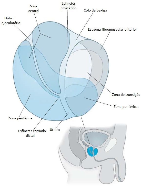 k prostata zona periferica
