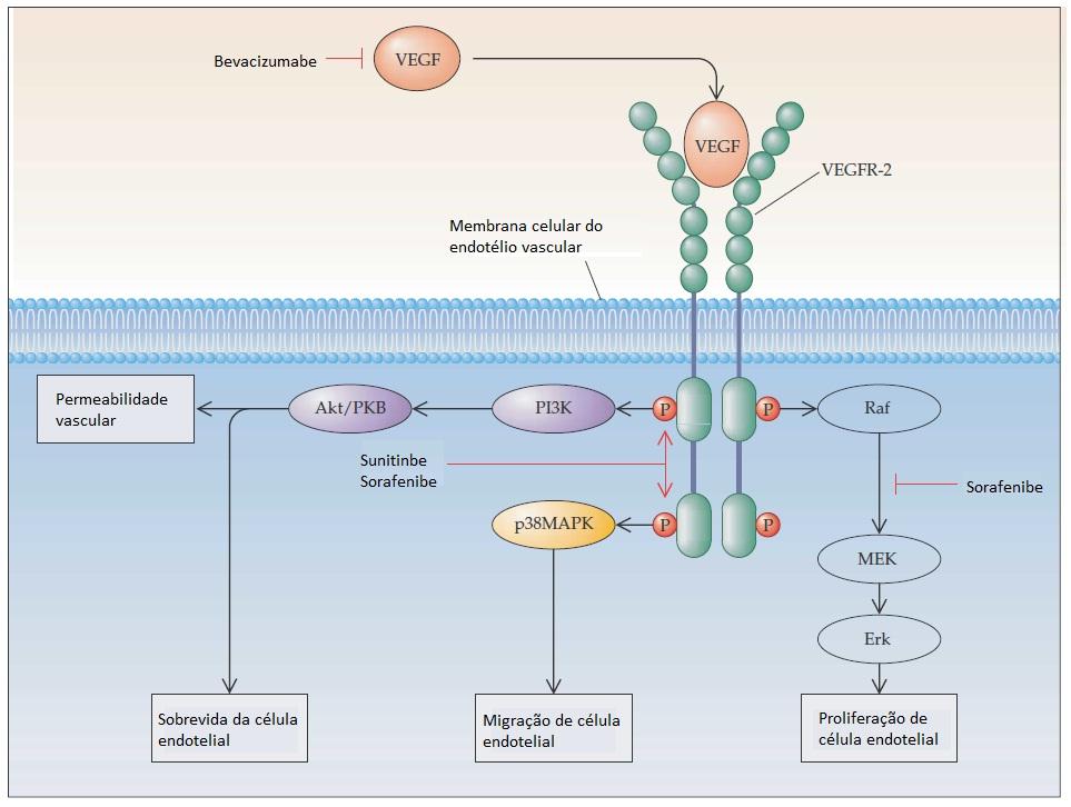 epidemiologia inoltre pathogenesis del ca prostata in ppt online
