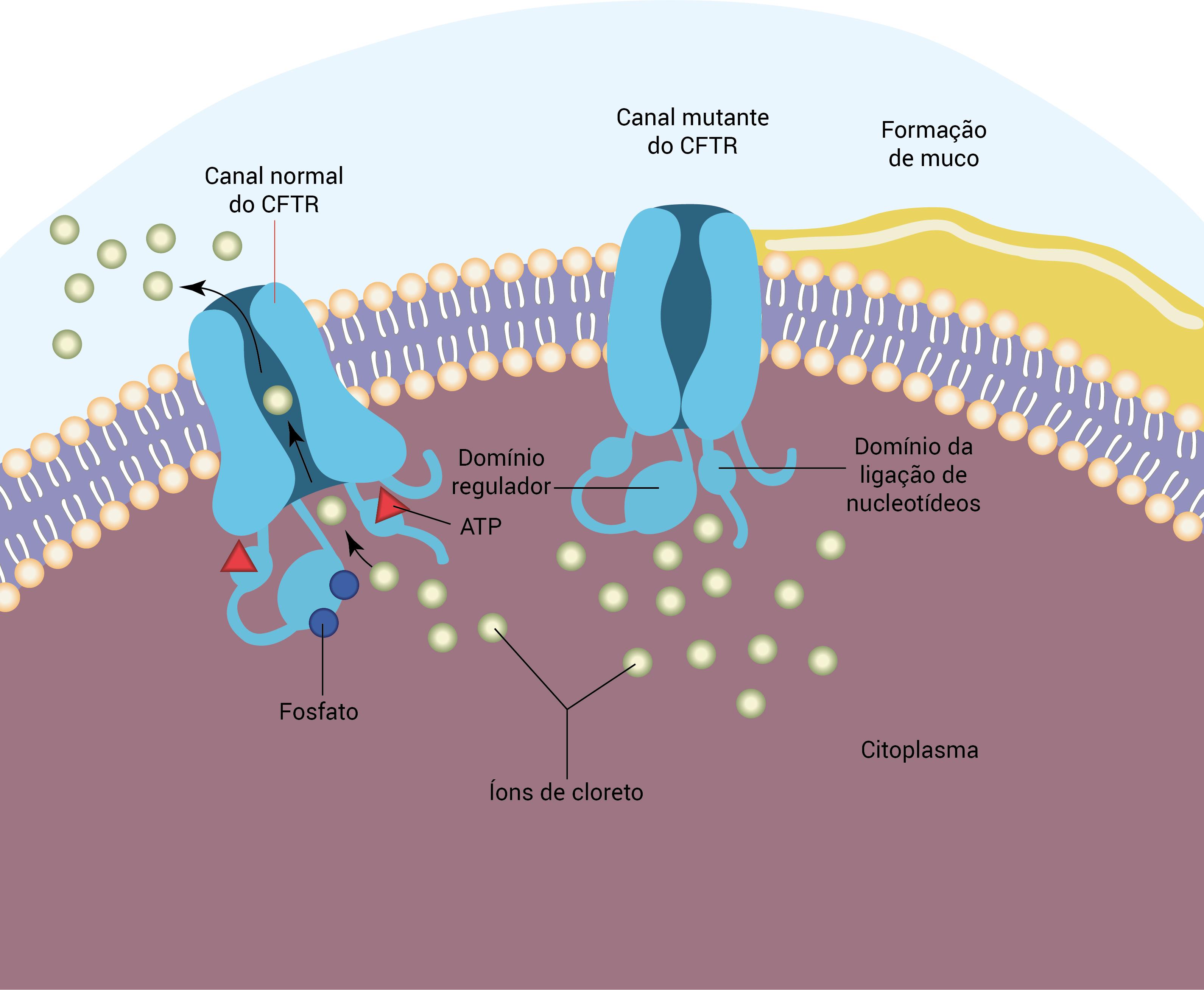 fibrosa cistica tratamento e sintomas de diabetes